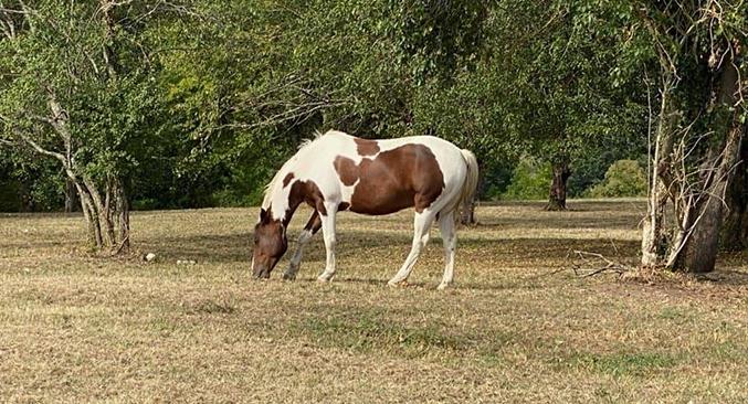 Accueil chevaux proche de Vichy